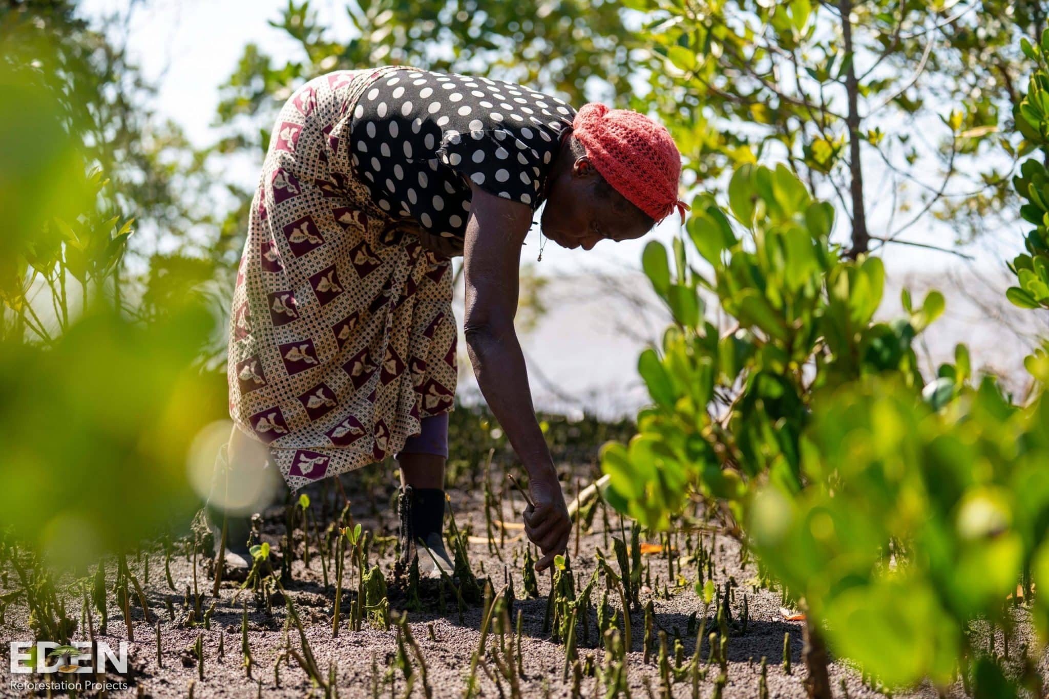 Woman planting a tree in Mozambique